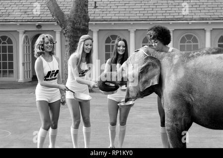 Strange tales of London. Beauty Queens (who will be in the pancake race on Tuesday) and baby elephant Minoti - she is five, but for an elephant that is a baby. February 1975 75-00776-012 - Stock Image