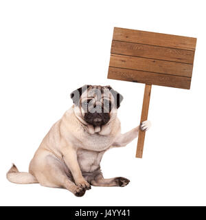 lovely cute pug puppy dog sitting down with blank wooden sign on pole, isolated on white background - Stock Image
