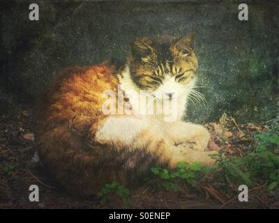 White and brown alley cat sitting in front of a rock and looking sleepy. Vintage painterly texture overlay. - Stock Image