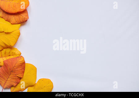 Autumn leaves on a white background. Nearby there is a place for text. Abstract autumn composition. - Stock Image
