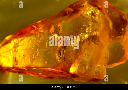 Prehistoric winged ant in Baltic amber - Stock Image
