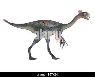 Dinosaurier Gigantoraptor / dinosaur Gigantoraptor - Stock Image