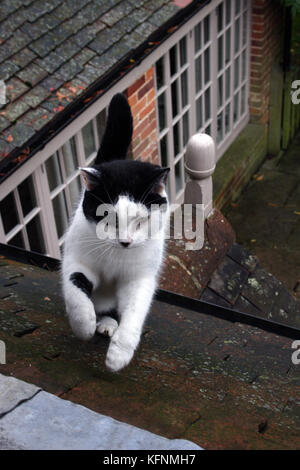 cat climbingn on roof - Stock Image