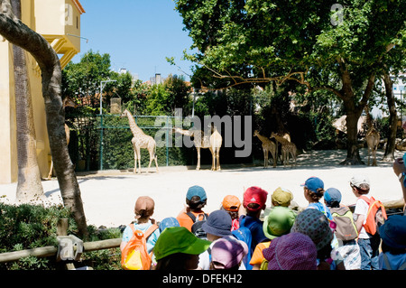 A group of schoolchildren visiting the giraffe enclosure at Lisbon Zoo, also known as Jardim Zoológico. - Stock Image