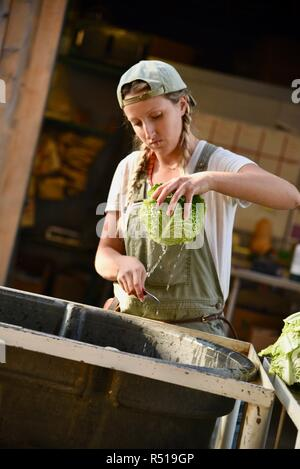 Attractive, young female farmer, blonde braids & hat, washing organic cabbage for market sale, at Front Porch Farm, Healdsburg, California, USA. - Stock Image