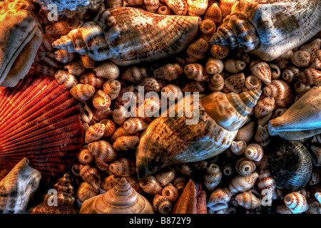 Sea shells - Stock Image