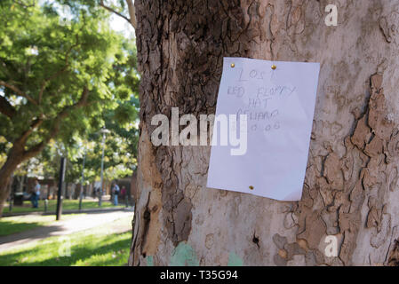A note pinned to a Eucalyptus (Gum) tree in a park in Surry Hills, NSW Australia (phone number removed) - Stock Image