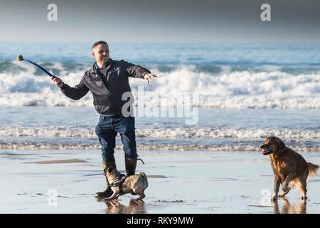 A man using a ball thrower with his pet dogs on Fistral Beach in Newquay in Cornwall. - Stock Image