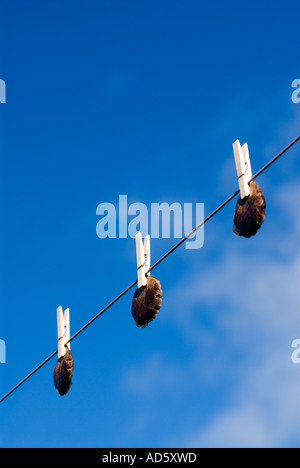 Concept picture Hanging tea bags out to dry three tea bags vertical format ready for the front cover of a magazine - Stock Image