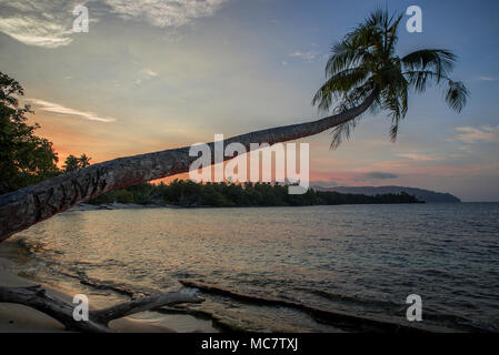 Postcard-style sandy beach with palms close to water at sunset, Mushu Island, Papua New Guinea - Stock Image