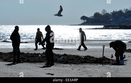 Anglers dig for clams along the beach in West Haven for fishing for Stripers on Monday afternoon. - Stock Image