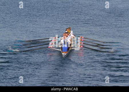 A Danish combined mix  8+ crew in DSR, Danish Students' Rowing Club colours in the international 6,5 km international Copenhagen Harbour Race 2018 - Stock Image