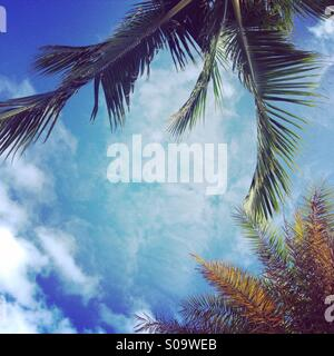 Coconut trees and blue skies with light cloud. - Stock Image