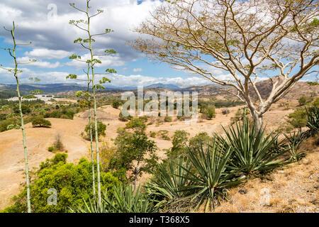 Dry savanna. Rural landscape, nature of East Timor or Timor-Leste, near Baucau, Vemasse, Laleia, Manatuto. Maritime Southeast Asia. - Stock Image