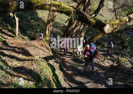 Group of trekkers climbing steps on a forest trail between Tadapani and Ghorepani, Annapurna Sanctuary, Nepal. - Stock Image