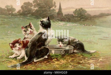 Four Kittens and Pan - Stock Image