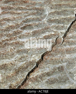 Fossilised tidal patterns - Stock Image