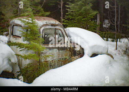 An old, 1950 Dodge B-Series pickup truck partially buried in deep snow, in a wooded area, behind a barn, in Noxon, Montana, USA.  This image was shot  - Stock Image