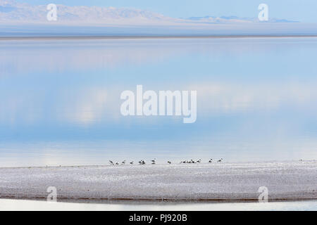 The Khyargas Nuur, A salt water lake in Khyargas district, Mongolia. - Stock Image