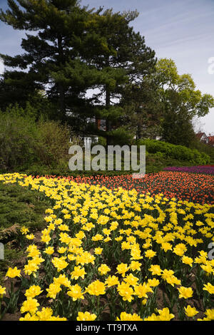 Tulip flower beds at spring time along Queen Elizabeth Drive, Ottawa, Ontario, Canada - Stock Image