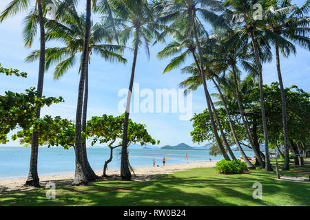 Idyllic view of an exotic tropical sandy sand with bent palmtrees, Palm Cove, Cairns Northern Beaches, Far North Queensland, QLD, FNQ, Australia - Stock Image