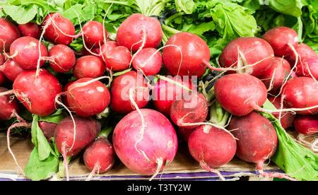Organic Radishes on market stall. - Stock Image