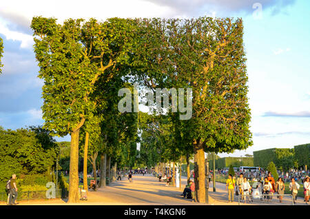 Champ de Mars park and gardens with square cut trees. Topiary. Avenue of trees. People, tourists, visitors to the park near Eiffel Tower - Stock Image