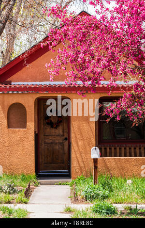 Front of residential home & Crabapple tree in full springtime bloom; Salida; Colorado; USA - Stock Image