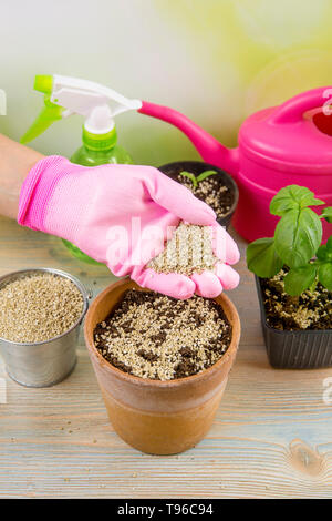 Woman gardener hand mixing vermiculite granules pellets with black gardening soil improves water retention, airflow, root growth capacity of all the p - Stock Image