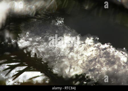 Close up of snowflakes lying on the needles of a fir twig. - Stock Image