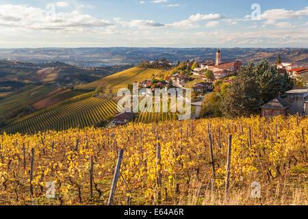 Vineyards, Treiso, nr Alba, Langhe, Piedmont (or Piemonte or Piedmonte), Italy - Stock Image