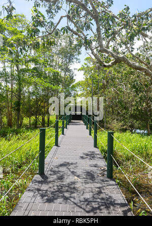 Abattoir Swamp is a popular birdwatching spot with a bird hide and paperbark trees, Atherton Tablelands, Far North Queensland, FNQ, QLD, Australia - Stock Image