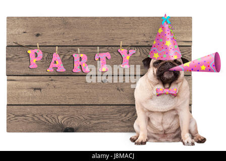 cute pug puppy dog with pink party hat and horn and wooden sign with text party, isolated on white background - Stock Image