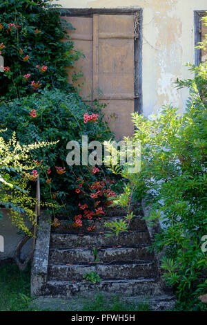 shrubs and flowers growing over a disused stone staircase in the village csesztreg zala county hungary - Stock Image