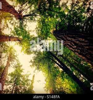 Summer trees in the woods in Canada - Stock Image