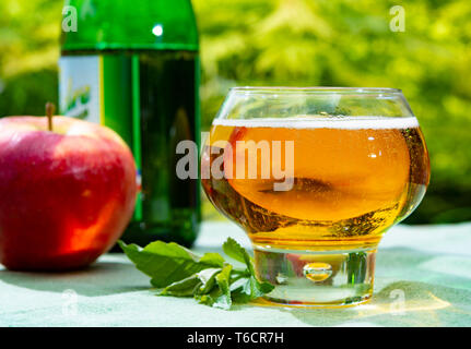 Glass with fresh cold French apple cider drink from Normandy region served with apples in green garden - Stock Image