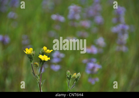 Spring season wildflowers meadow nature horizontal yellow flower beautiful - Stock Image