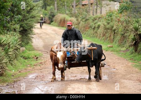 Malagasy Man and Ox Cart, Subsistence Farming, Near Lake Tritriva, Madagascar, Africa. - Stock Image