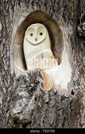 Owl Tree Carving at RSPB Leighton Moss Reserve, Silverdale, Lancashire ,UK - Stock Image