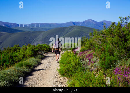 Camino de Santiago (Spain) - Pilgrims walking along the way of St.James, in the Bierzo green landscape - Stock Image