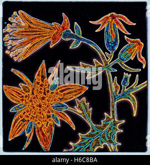 Flower Six. Painting digitally adjusted - Stock Image