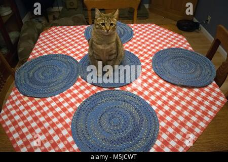 A cat sits in the middle of a table. - Stock Image