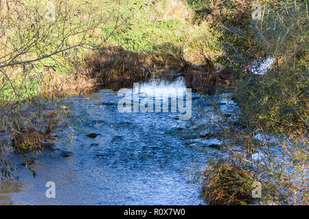 A shallow rocky patch in the river the Bristol Avon as it passes through Chippenham see in autumn morning sunlight - Stock Image