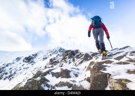 A hiker ascending Swirral Edge towards Helvellyn in the Lake District. - Stock Image
