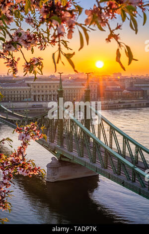 Budapest, Hungary - Spring in Budapest with beautiful Liberty Bridge over River Danube with rising sun and cherry blossom at foreground - Stock Image