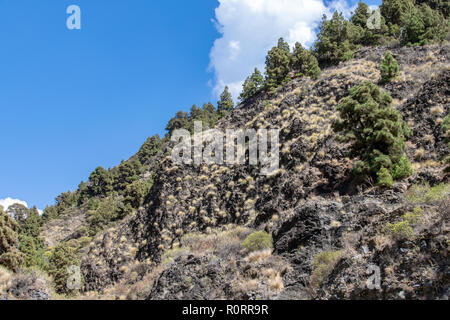 Vegetation growth on the edges of the ravine at Barranco de Las Angustias, La Palma, Canary Island, Spain - Stock Image