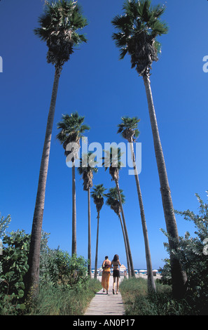 Miami south beach Florida fl delano hotel two women walk to the beach flanked by tall thin palm trees - Stock Image
