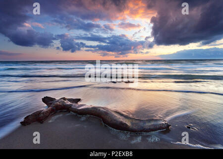 Trunk, Sunset, Coast, Baltic Sea, Mecklenburg, Germany, Europe - Stock Image