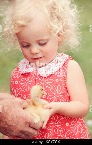 little girl holding duckling - Stock Image