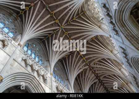 Exeter cathedral ceiling, the longest uniterrupted gothic stone vaulted ceiling of any cathedral in the world. - Stock Image